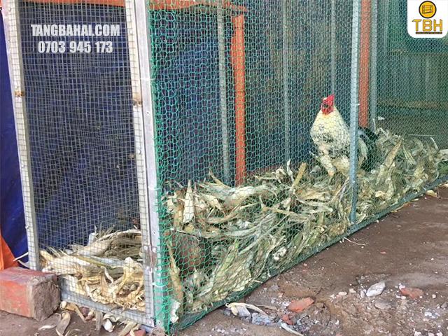 yêu cầu kỹ thuật khi làm chuồng gà